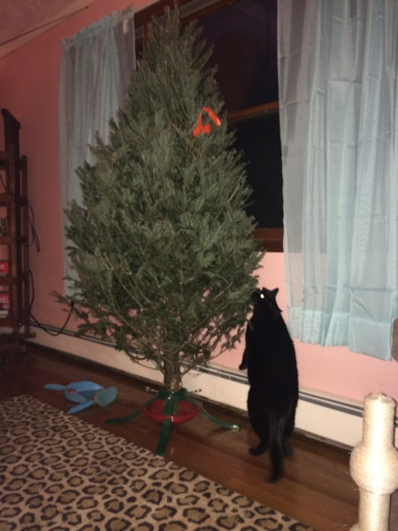 Um. There's a tree in the house?