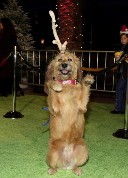 The Grinch Who Stole Christmas Dog.Los Angeles Premiere Of How The Grinch Stole Christmas